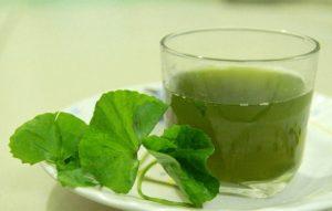 Nước ép rau má có tác dụng giải độc, kháng viêm rất hiệu quả với bệnh mề đay