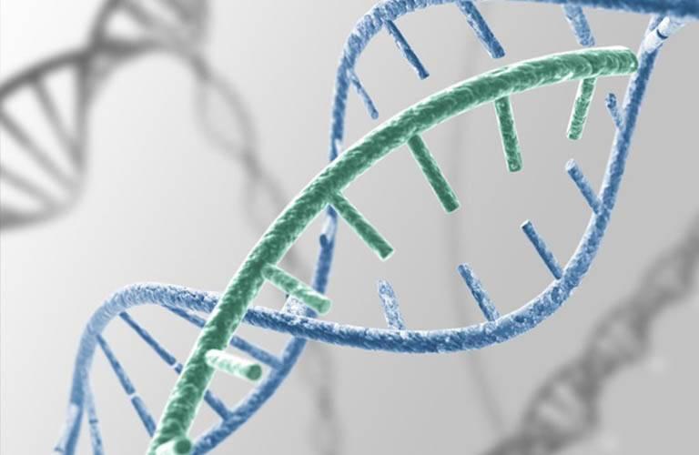 Di truyền là một yếu tố gây ra viêm da tiết bã thường gặp