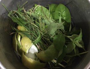 dùng cỏ mần trầu chữa bệnh