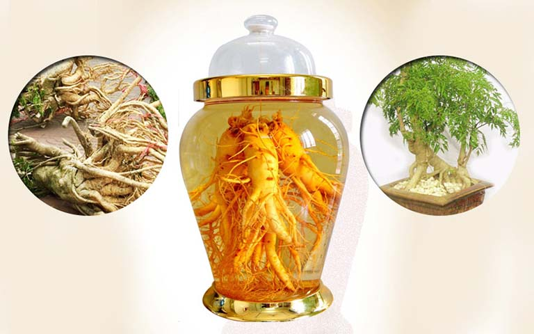 Uống rượu rễ cây đinh lăng giúp chữa mề đay từ bên trong