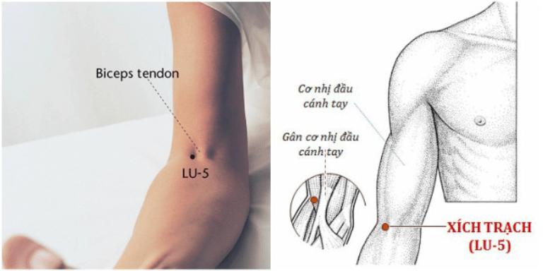 Vị trí huyệt xích trạch, một trong các huyệt đạo giúp trị ho hiệu quả