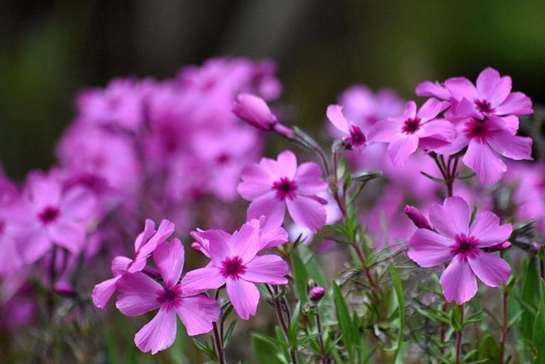 Bị dị ứng phấn hoa