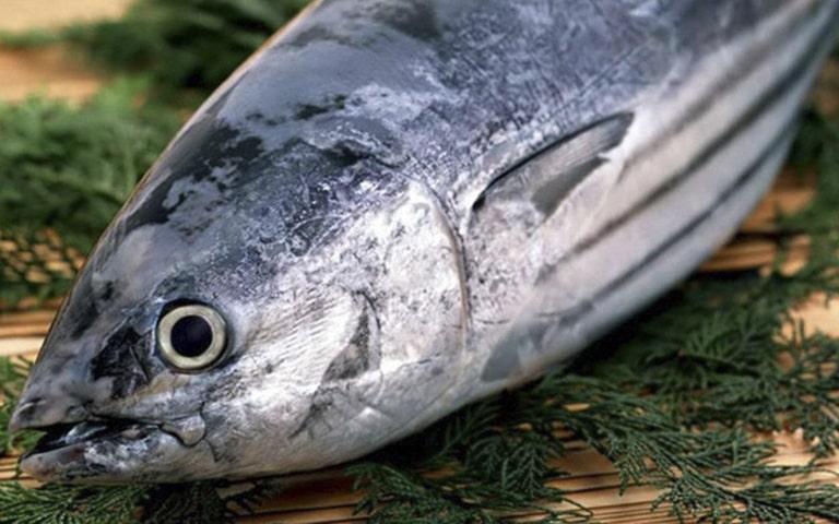 Nên chọn cá ngừ tươi để chế biến giúp hạn chế hấp thu cá histamine vào cơ thể