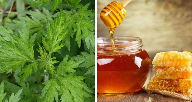 cách chữa thoát vị đĩa đệm bằng lá ngải cứu và mật ong