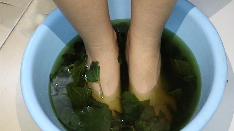 bài thuốc ngâm chân chữa đau nhức xương khớp bằng lá lốt