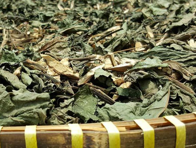 Dùng lá mật gấu phơi khô để hãm nước chè, uống giúp trị bệnh tiểu đường loại 2.