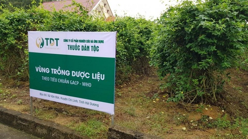 Vườn thảo mộc điều trị hắc lào của Trung tâm Nghiên cứu và Ứng dụng TDT