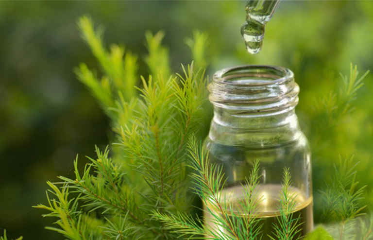 Sử dụng tinh dầu tràm điều trị bệnh zona ở tay chân tại nhà mang lại hiệu quả tốt