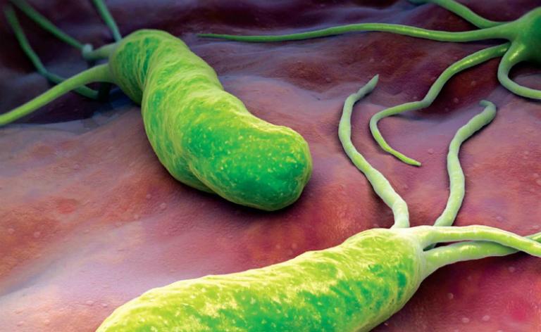 Vi khuẩn HP sinh sống được trong môi trường axit của dạ dày và gây ra những bệnh dạ dày nguy hiểm.