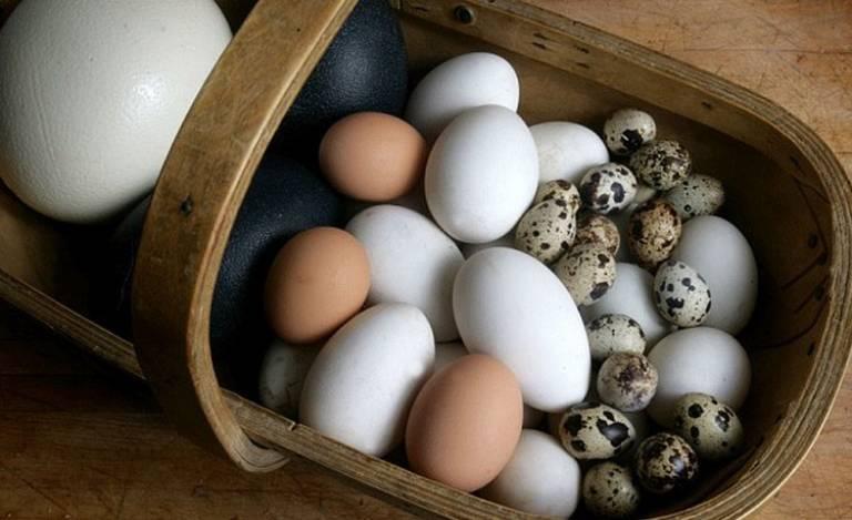 Người bệnh có thể ăn trứng gà, trứng vịt, trứng cút...