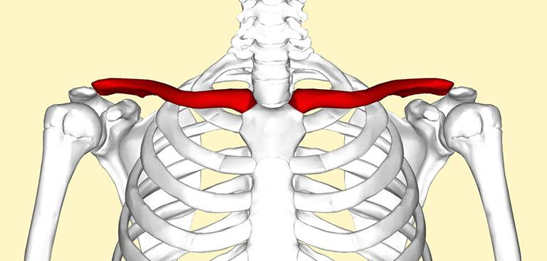 giải phẫu chức năng khớp vai