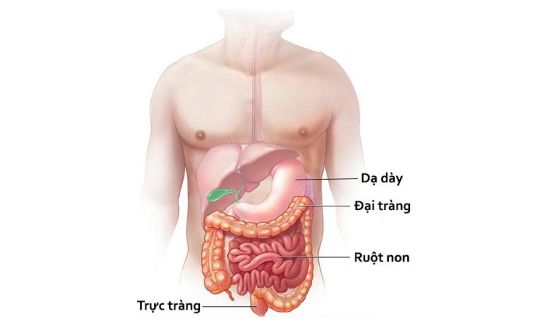 Men tiêu hóa là các enzyme giúp xử lý thức ăn.