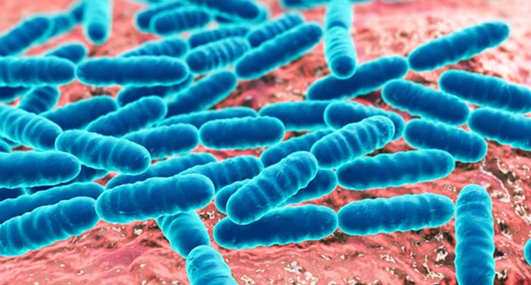 Probiotic là những lợi khuẩn giúp hệ tiêu hóa làm việc tốt hơn.