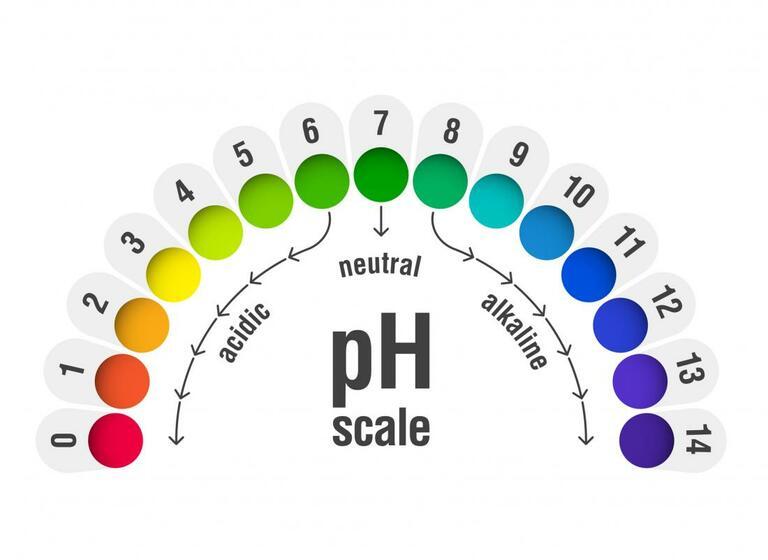 Độ pH trong âm đạo ảnh hưởng nhiều đến khả năng sống sót của tinh trùng