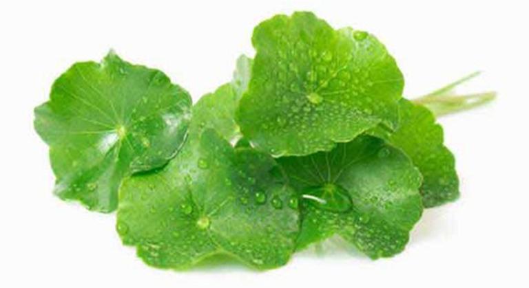 Nước ép rau má tươi có tác dụng ổn định đường huyết, ngăn chặn biến chứng tiểu đường lâu năm