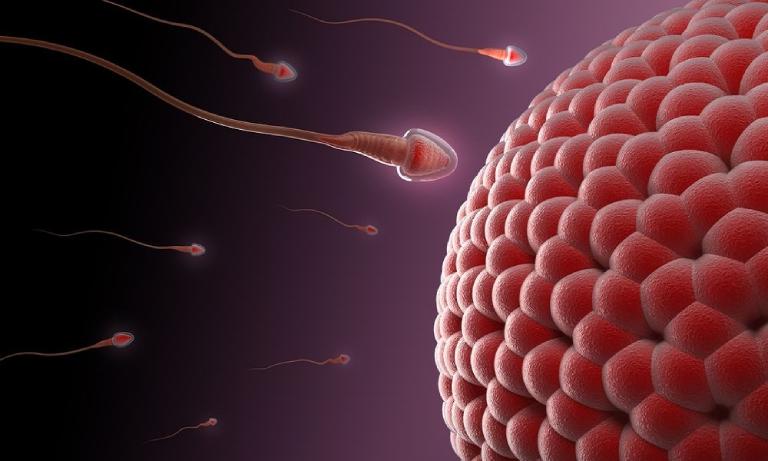 Các bệnh lý liên quan đến tình trạng tinh trùng có màu đỏ, nâu đỏ điều nguy hiểm