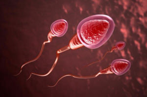Tinh trùng có màu đỏ là dấu hiệu bất thường cho thấy cơ thể đang mắc bệnh lý nam khoa