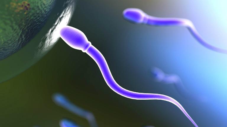 Quan hệ tình dục quãng thời gian 14h - 16h, tinh trùng thường khỏe mạnh, khả năng thụ thai sẽ rất cao.