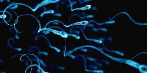 Để biết tinh trùng nhiều hay ít, yếu hay mạnh, nam giới cần thực hiện xét nghiệm tinh dịch.