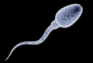 Đặc điểm hình dáng của tinh trùng bao gồm các bộ phận: đầu, cổ, thân, đuôi.