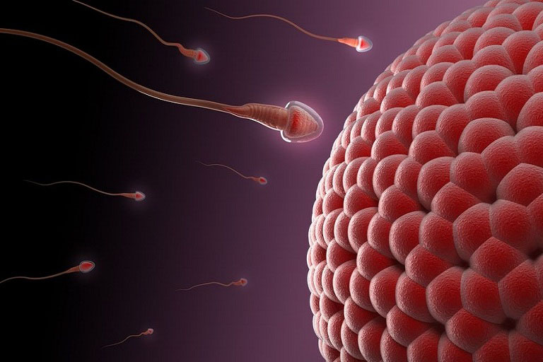 Tinh trùng yếu là nguyên nhân khiến nam giới dễ bị vô sinh