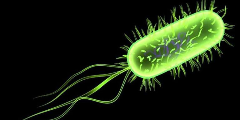Vi khuẩn E.Coli là một trong những tác nhân gây nhiễm khuẩn đường ruột tiêu chảy ở trẻ sơ sinh