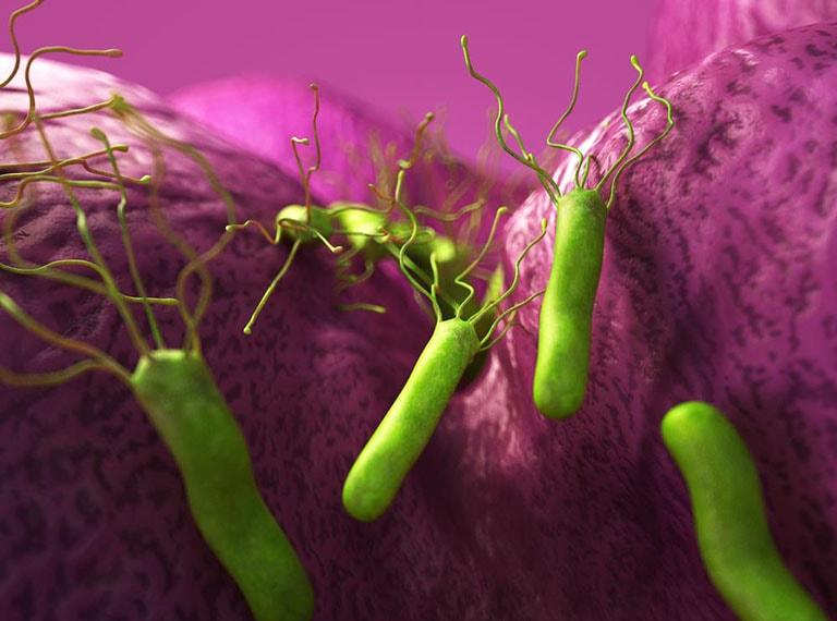 nhiễm vi khuẩn hp nên ăn gì