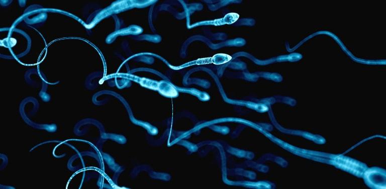 Tinh trùng là các tế bào mang thông tin di truyền của nam giới.