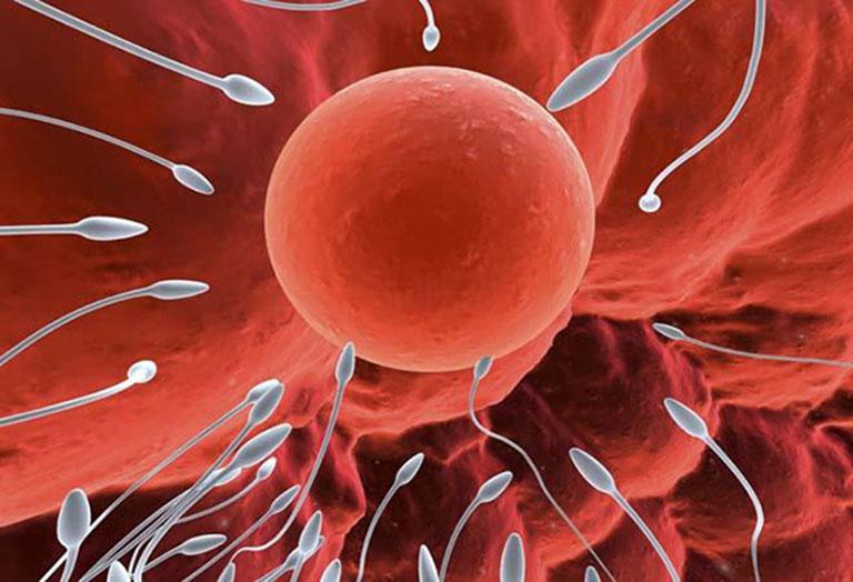 Nếu nam giới chỉ mắc phải chứng xuất tinh sớm thì vẫn hoàn toàn có khả năng có con