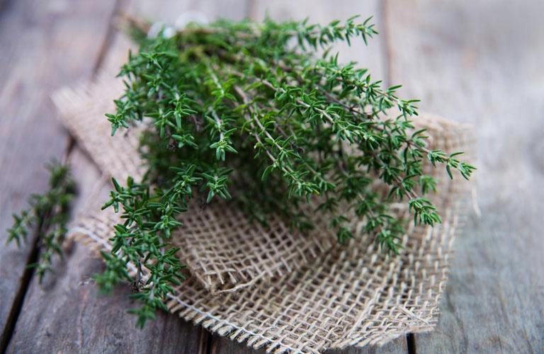 cỏ xạ hương