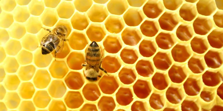 Mật ong là mật ngọt do ong tiết ra. Mật ong chứa nhiều chất dinh dưỡng và có khả năng kháng khuẩn cao.