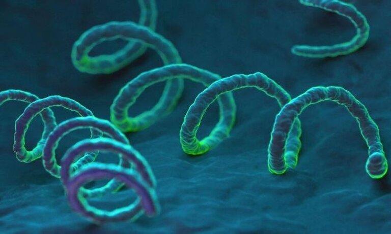 Giang mai là bệnh do xoắn khuẩn giang mai có tên là Treponema Pallidum gây ra