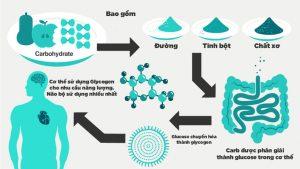 Quá trình chuyển hóa tinh bột trong cơ thể