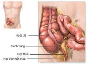 ruột thừa có vai trò nhất định thậm chí quan trọng trong hệ tiêu hóa