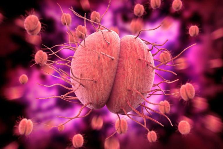 Song cầu khuẩn lậu Neisseria gonorrhoese là tác nhân chính gây ra bệnh lậu ở miệng