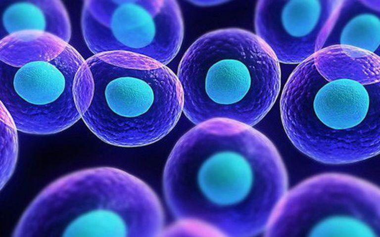 Công nghệ tế bào gốc đã được ứng dụng chữa nhiều bệnh nan y
