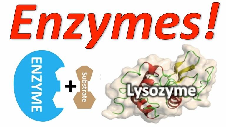 Thành phần trong nước miếng gồm: enzyme, kháng thể và bạch cầu