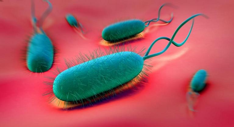 Xét nghiệm vi khuẩn hp dạ dày
