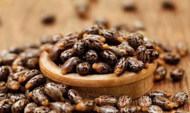 Hạt thầu dầu vị ngọt cay, tính bình, có độc, có tác dụng tiêu thũng, bài nung, bạt độc
