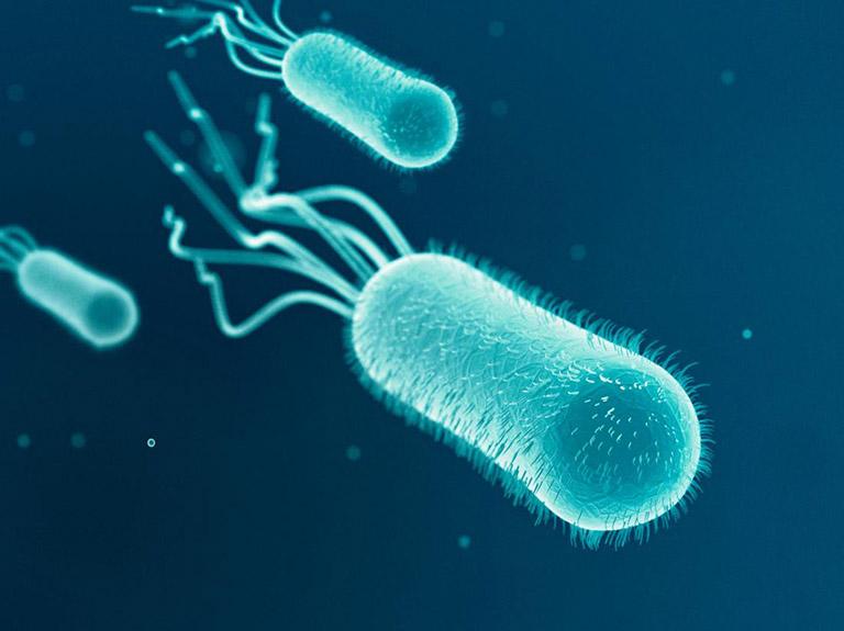vi khuẩn E. Coli gây bệnh viêm đường tiết niệu ở người