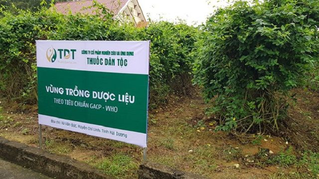 Vườn trồng dược liệu của Trung tâm Thuốc dân tộc ở Hải Dương