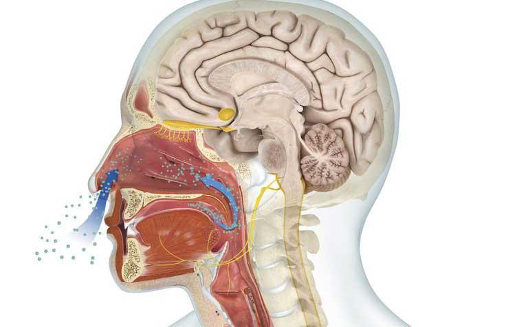 chức năng của mũi