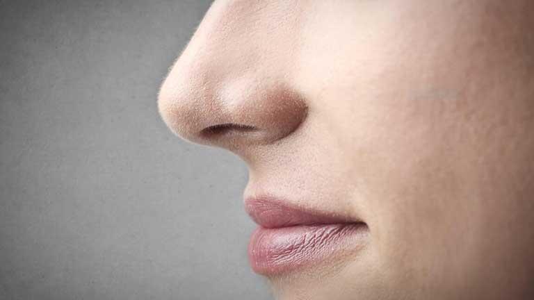 giải phẫu mũi