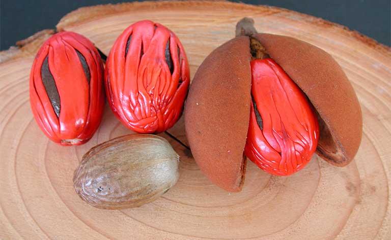 hạt nhục đậu khấu