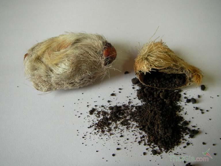 Xạ hương có nguồn gốc từ hươu xạ hay chồn hương