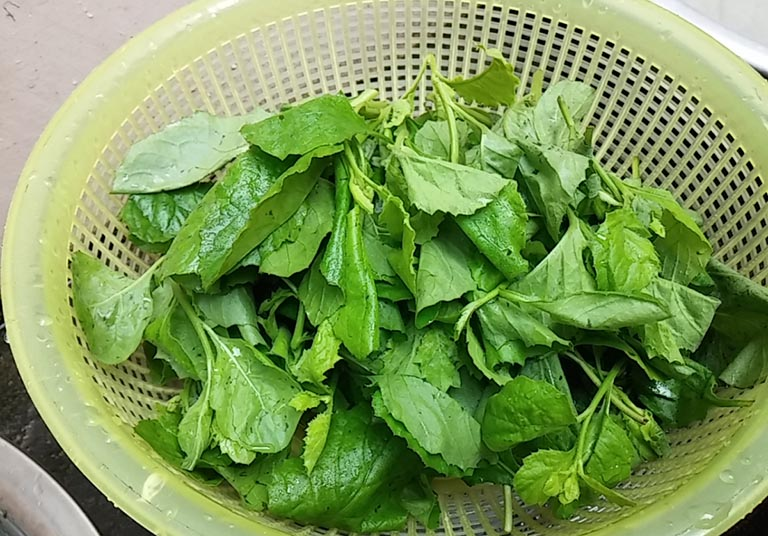 tác dụng của rau cải trời