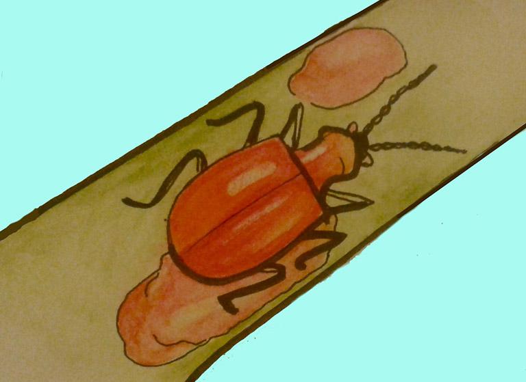 cánh kiến đỏ