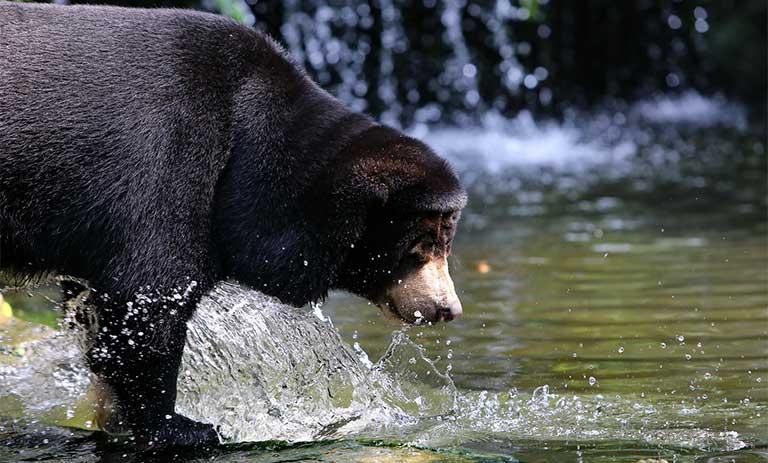 mật gấu có tác dụng gì