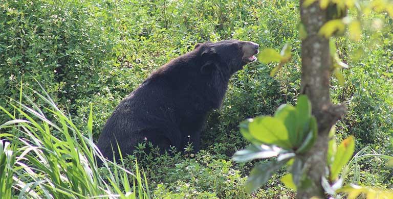 tác dụng của mật gấu