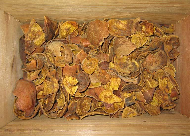 cây thạch lựu